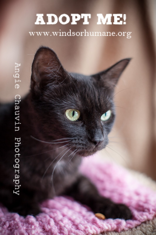 Pet of the Week Prada as seen in this photo courtesy of Angie Chauvin for the Windsor/Essex County Humane Society.