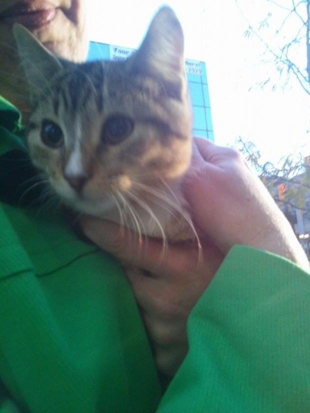 Pet pick Tabitha