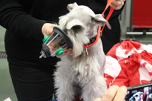 Dixie the dog show cases an oxygen mask Friday, Dec. 13 at an event in Windsor. (Windsor Fire and Rescue Services)