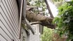 Close call: Tree crashes into bedroom