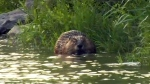 Beaver beaten to death outside Wolseley bar